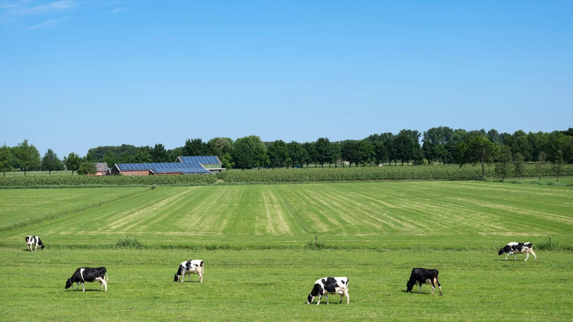 The time is now for Farm solar PV
